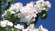Лек аромат на пролет..