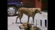 40 000 кучета излизат всяка година на улиците в София, сметнаха специалисти
