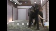 Слон говори на корейски
