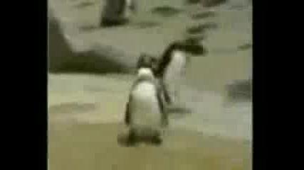 Пингвин се кефи на рап песни!!!