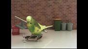 Как се тренират папагалчета да карат скейтборд