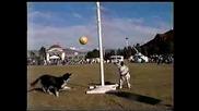 Куче Срещу Куче - Кой Ще Одари Първи Топката