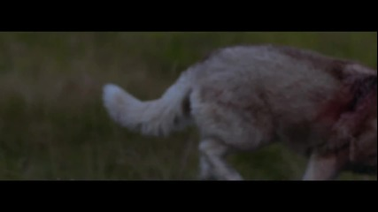 Страхотна! David Guetta ft. Sia - She Wolf ( Официално Видео )