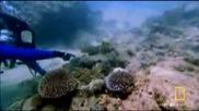 Смъртоносна каменна риба