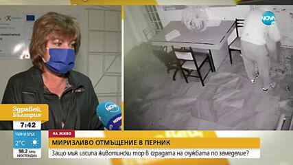 Мъж изсипа животински тор в сградата на Общинската служба по земеделие в Перник