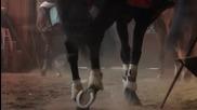 Конна езда с препятствия в зала Славия