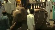 Слон се вози във Vw
