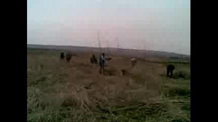 bilkarite ot selo boika2011