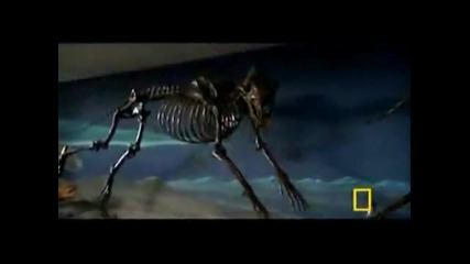 National Geographic Channel Dog Attack Styles