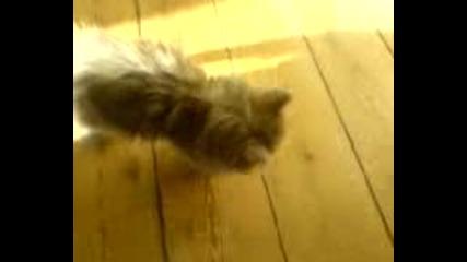 Коте Издава Странни Звуци !