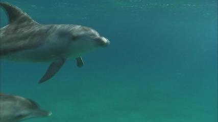 Делфините - По-красиви или по-умни