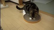 Котето Мару .. Сладур ..