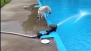 Това куче не е от най-умните - Смях
