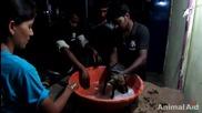 Хора спасяват безпомощно кученце полято цялото с катран