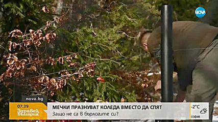 Мечки от парка в Белица празнуват Коледа, вместо да спят