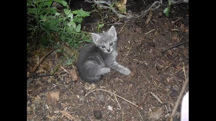 Много От Най-сладките Котки