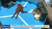 Сготвиха октопода оракул, предсказвал резултати от мачове на Мондиала