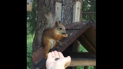 Катерица си хапва семки от ръката на момиче !
