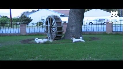 Три кучета след енергийна напитка ..