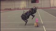 Вижте как изглеждат Роботизираните животни!