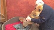 Любовта на лисицата към мъжа, който я е спасил от сигурна смърт.