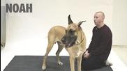 Реакциите на кучета, когато човек лае срещу тях !