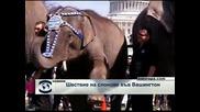 Шествие на слонове във Вашингтон