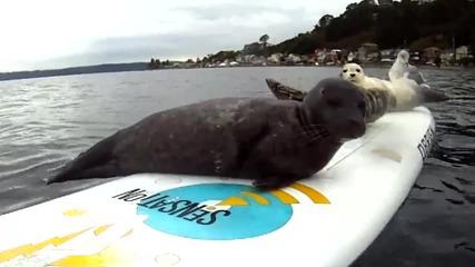 Harlem Shake Завладя И Тюлените