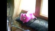 Розовото Куче - Нови Тенденции В Кучешките Прически