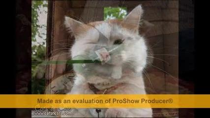Най-смешните котки!