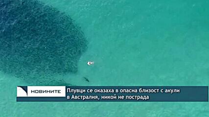 Мъж в критично състояние след нападение на акула в Австралия, десетки други се разминаха на косъм