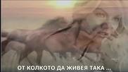 Triantafillos - Kalitera Na Petena