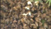 Нашествие на пчели /2част/