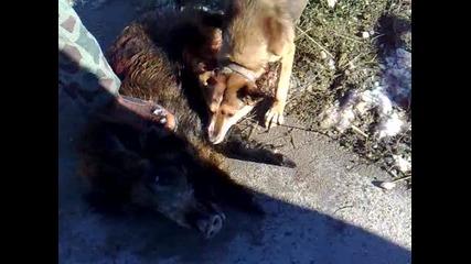 Лов на прасета