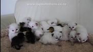 Малки котенца си играят с патета!