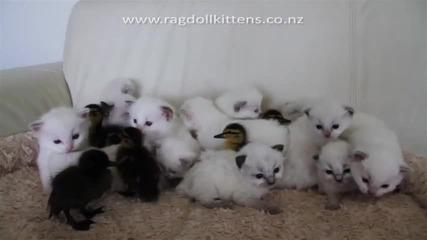 Котенцата Малки :}