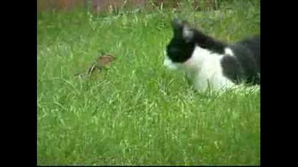 Котка Срещу Катерица Нинджа [гарантиран Смях]