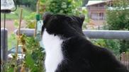 Котка с много красиви очи
