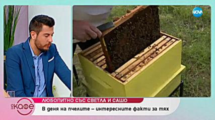 В деня на пчелите - интересните факти за тях.