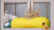 Котки преподават йога! Най-странните и смешни пози, които сте виждали!