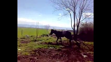 рицарят с коняя