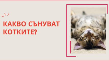 Какво сънуват котките