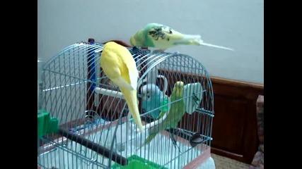 папагали - приятели