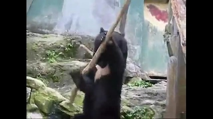Мечка упражнява бойни изкуства 101% смях