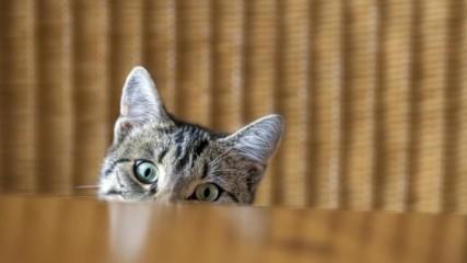 Защо котките обичат да бутат неща