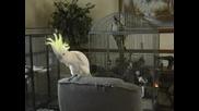 Супер Смешен Папагал