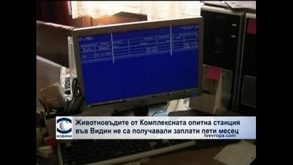 Животновъдите от Опитна станция - Видин, не са получавали заплати от 5 месеца