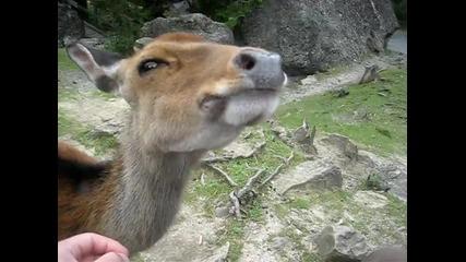 Приятелско еленче