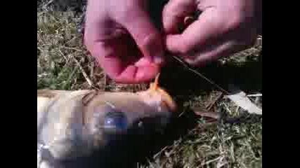Риболов с Динката 4