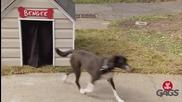Скрита камера! Кучета излизат от празна кучешка колиба ( Just For Laughs Gags )